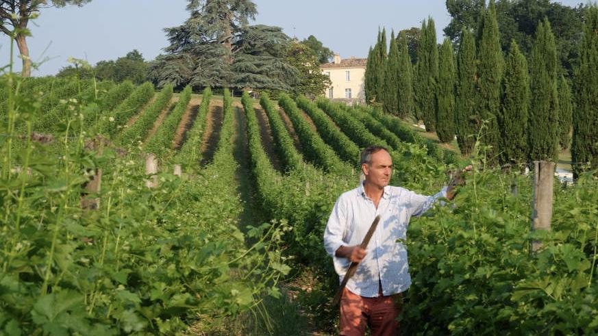 Vigneron bio Château Couronneau