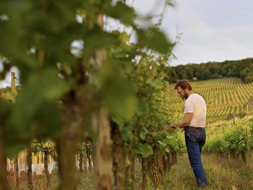 Vigneron bio Domaine Vincent Fleith