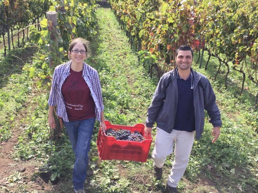 Vigneron bio Famiglia Statella